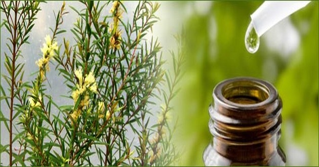 rosemary essential oil uses
